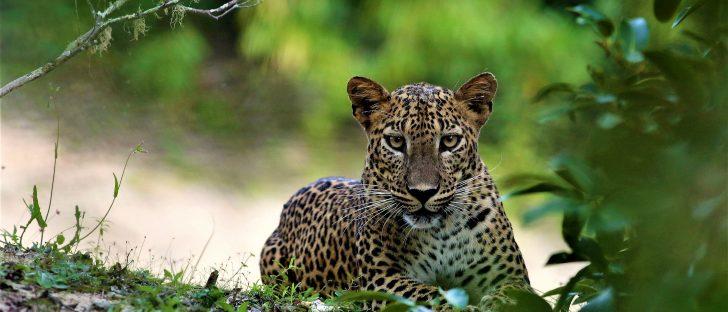Why you should visit Sri Lanka if heading to the Maldives