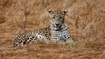 Sri Lankan safari